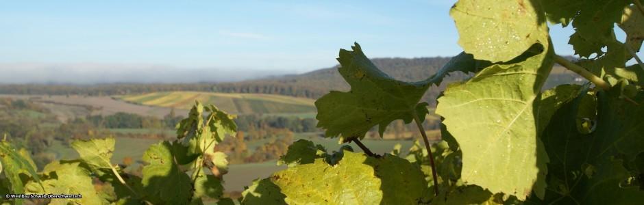 Winzerhof Schwab Oberschwarzach Herbst